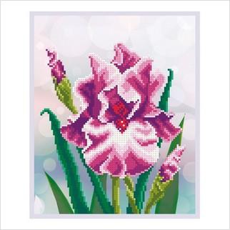 Нежный цвет - Т-1187 - ВДВ - Схема для вышивки бисером - Цветы