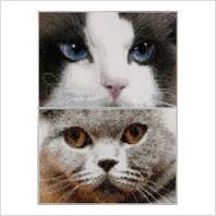 Набір для вишивання ''Кішки Смоки + Блу